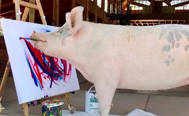 painting pig