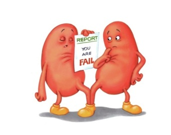 Kidneys cartoon