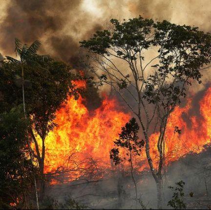 Rainforest fires